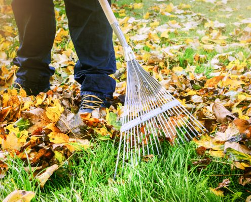avoid some of the most basic lawn care mistakes in the fall time